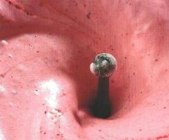 Espuma de fruta congelada