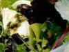 Picada de ajo y perejil