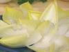 Ensalada de endibias con salsa de yogur y nueces