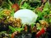 Ensalada con helado de queso Roquefort y vinagreta de nueces